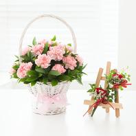 핑크카네이션+카네이션코사지(포함)